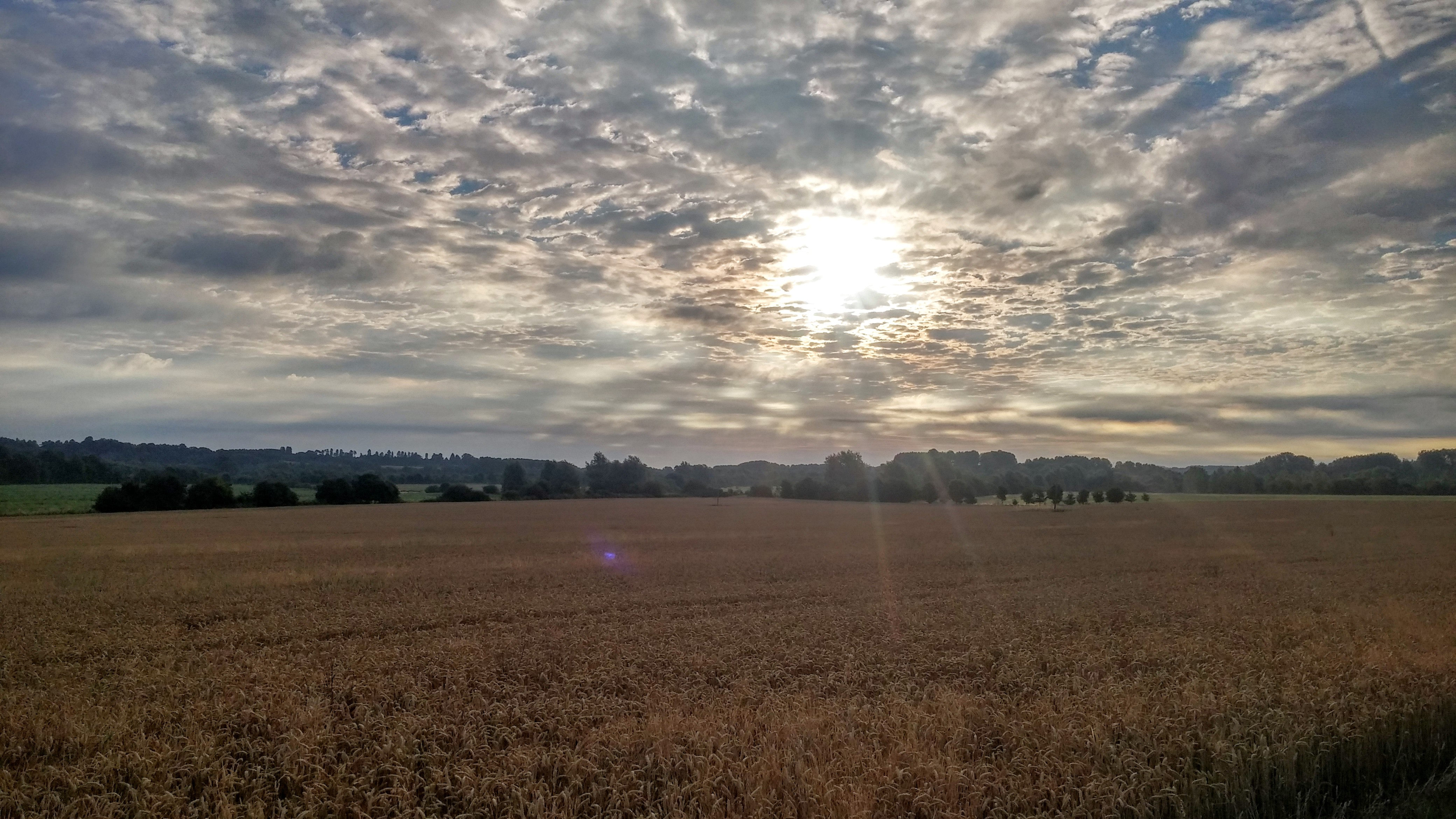 Brimpton Fields