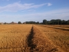 Harvested Brimpton Fields